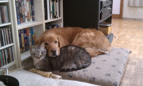 Tiger and Lucy were inseparable.